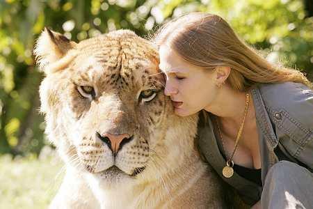Liger, una cruza de león macho y tigre hembra